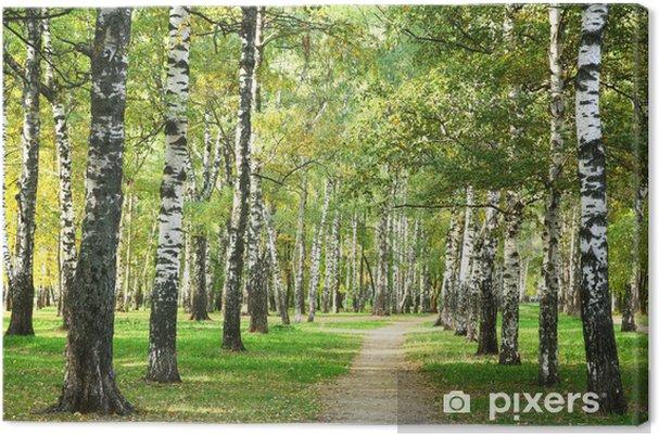 Obraz na płótnie Sunny rano jesienią w parku brzozy - Tematy