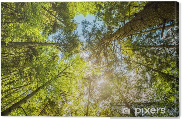 Obraz na płótnie Sunshine w kolorowym lesie z błękitne niebo i wspaniała pogoda - Pory roku