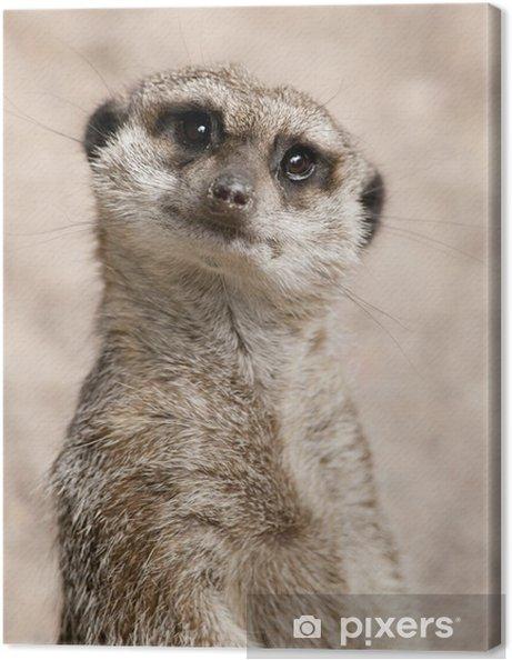 Obraz na płótnie Surykatka - Fikcyjne zwierzęta