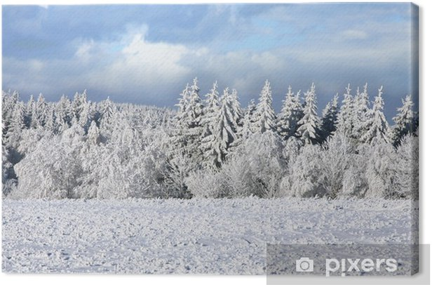 Obraz na płótnie Świerk pokryte śniegiem. Zimowy krajobraz. - Pory roku