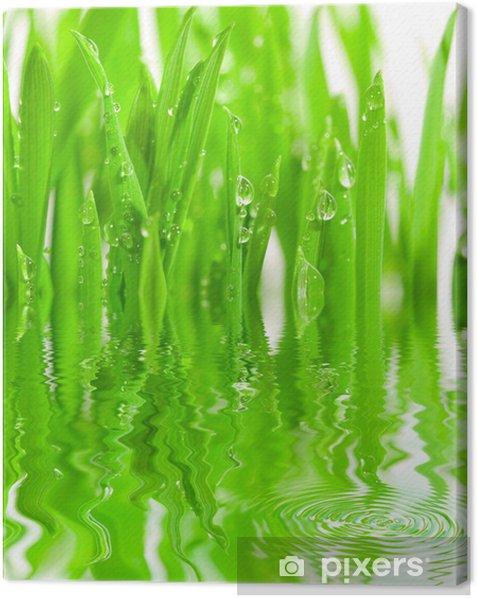 Obraz na płótnie Świeża trawa z kroplami rosy - Pory roku