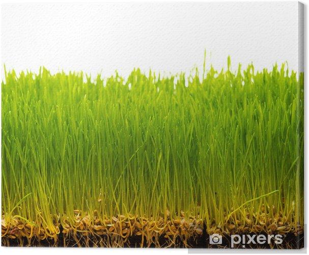 Obraz na płótnie Świeża zieleń trawy i gleby z nasion - Pory roku