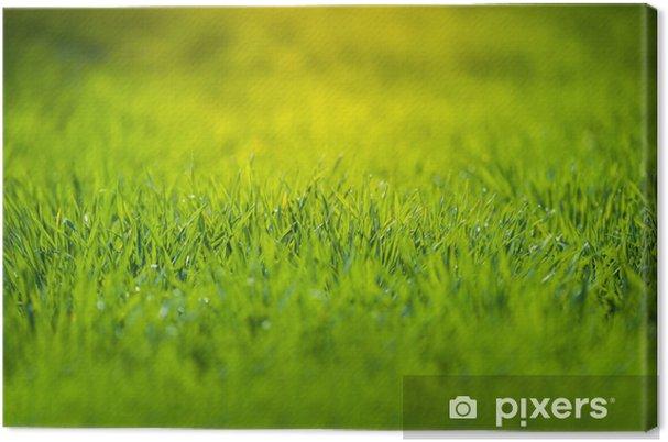 Obraz na płótnie Świeże zielona trawa - Pory roku