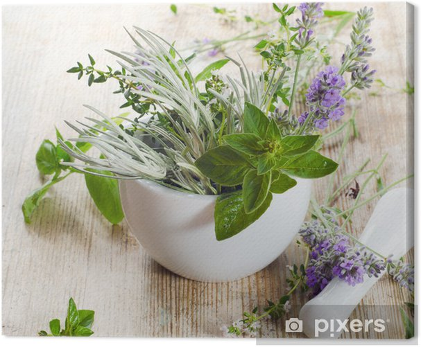 Obraz na płótnie Świeże zioła - Przyprawy i zioła