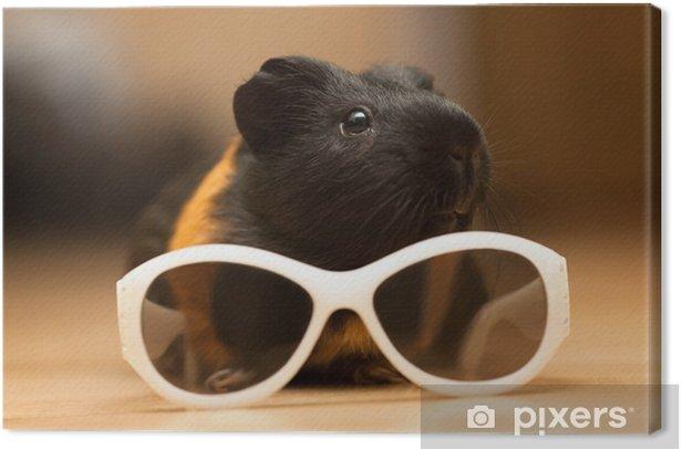 Obraz na płótnie Świnka w okularach - Ssaki
