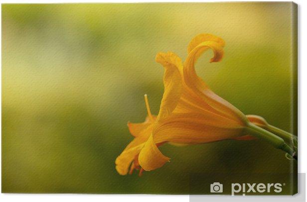 Obraz na płótnie Szczegółowo Hemerocallis kwiatów żółty, pomarańczowy, makro, flora - Kwiaty