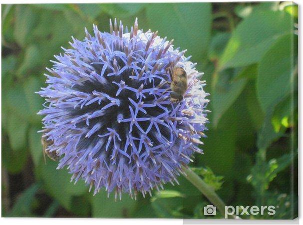 Obraz na płótnie Szczypiorek Kwiat z muchą - Kwiaty