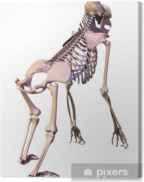 Obraz na płótnie Szkielet goryla - Zdrowie i medycyna