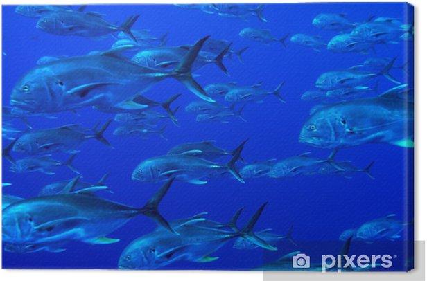 Obraz na płótnie Szkoła ryb tuńczyka, Kuba - Tematy