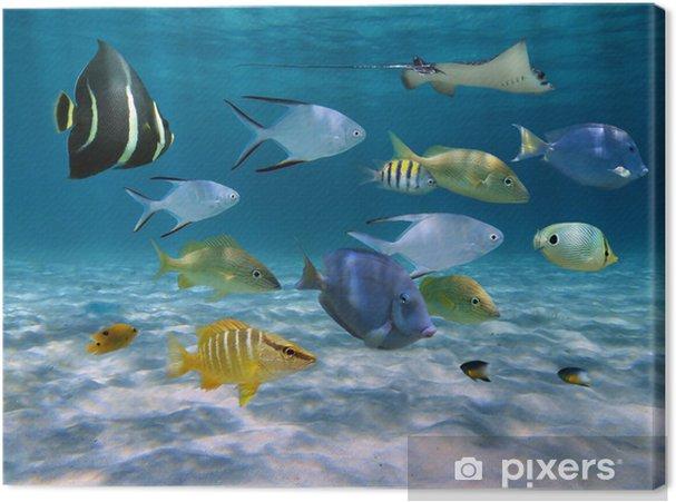 Obraz na płótnie Szkoła ryby nad piaszczystym dnie oceanu - Tematy