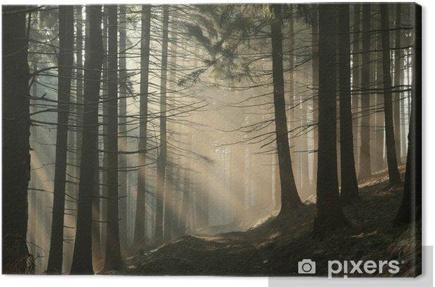 Obraz na płótnie Szlak w górach w mglisty poranek wczesną wiosną - Lasy