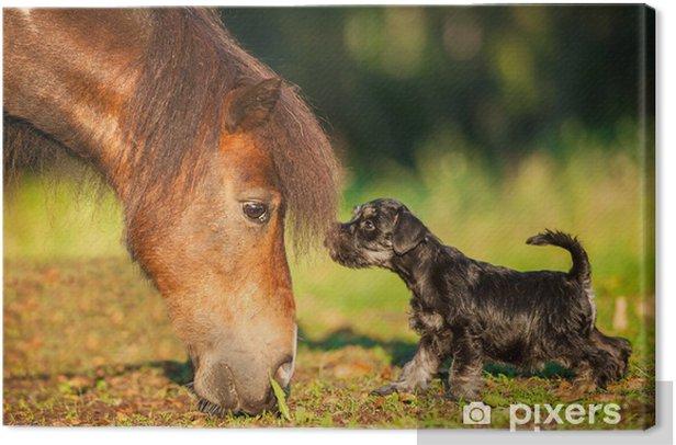 Obraz na płótnie Sznaucer miniaturowy szczeniaka z małym Kuc szetlandzki - Ssaki