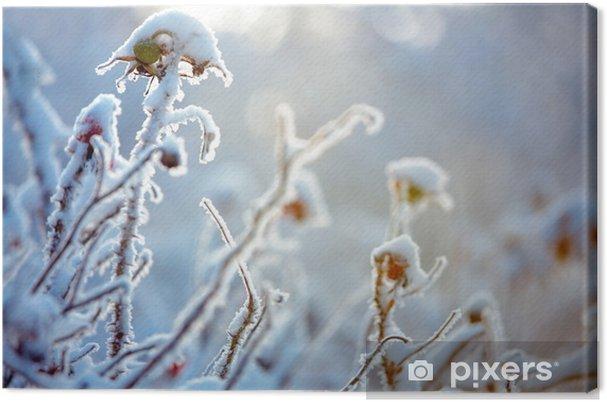 Obraz na płótnie Szron na gałęziach krzewów - Pokój