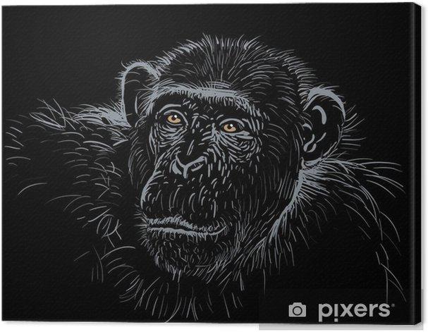 Obraz na płótnie Szympans - Afryka
