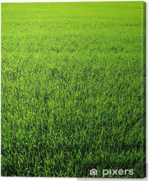 Obraz na płótnie Tekstury zielony trawnik - Rośliny