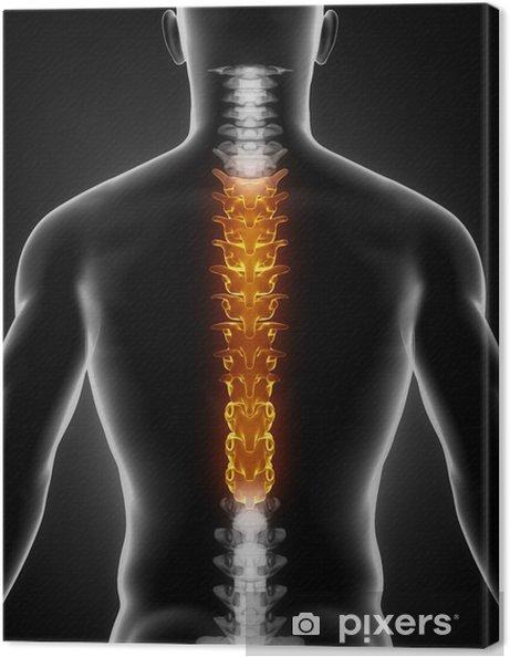 Obraz na płótnie Thoracic anatomia kręgosłupa tylny widok - Zdrowie i medycyna