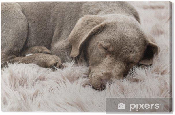 Obraz na płótnie Tiefschlaf - Zwierzęta