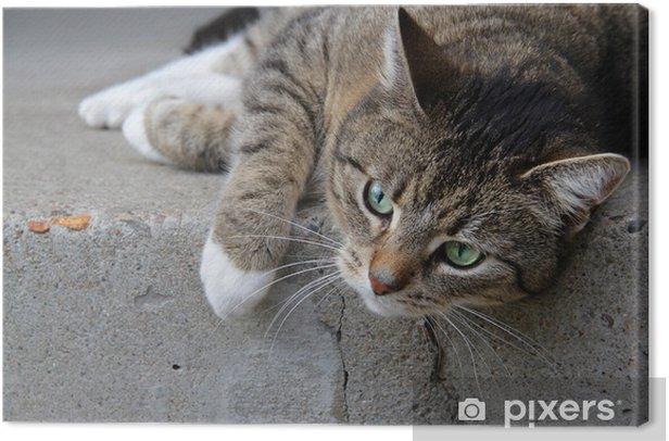 Obraz na płótnie Tiger Cat na schodach - Tematy
