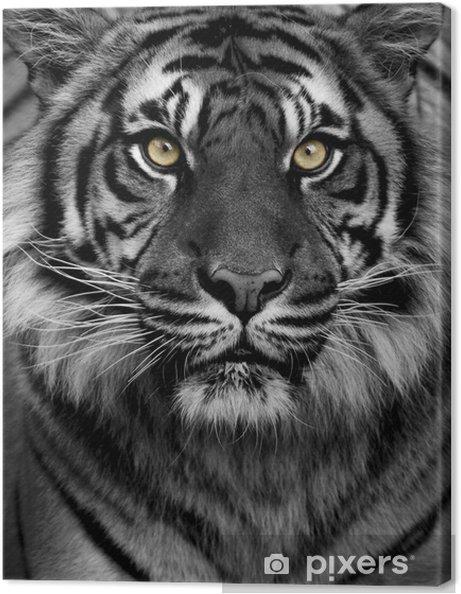 Obraz na płótnie Tiger Eyes - Style
