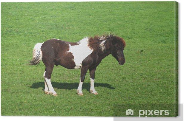 Obraz na płótnie Tinker, koń, zatoki pinto - Ssaki
