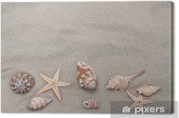 Obraz na płótnie Tło muszli i rozgwiazda na piasku - Oceania