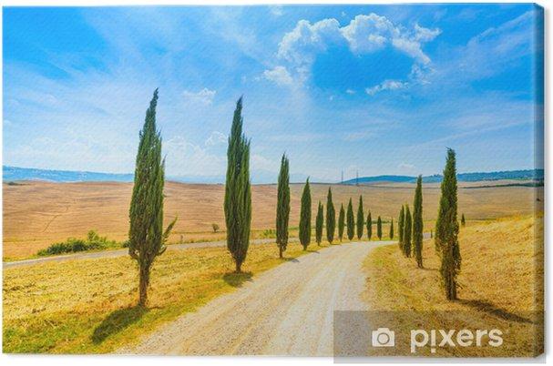 Obraz na płótnie Toskania, Cyprysy white road krajobrazu wiejskiego, Włochy, Europa - Tematy