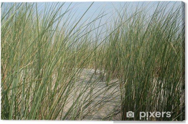 Obraz na płótnie Trawa marram - Woda