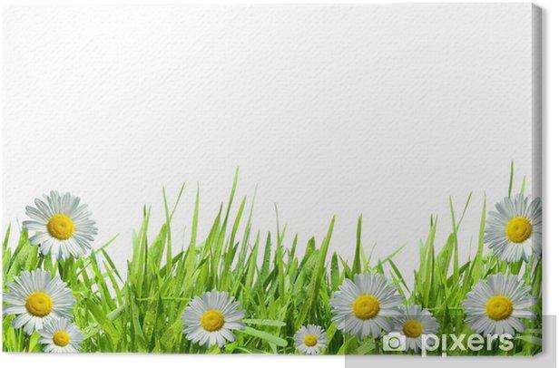 Obraz na płótnie Trawa z białych stokrotek na białym - Kwiaty