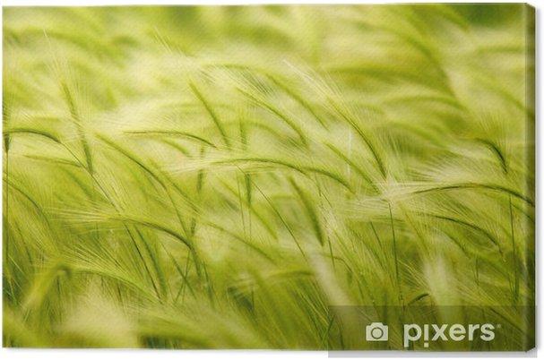 Obraz na płótnie Trawa - Krajobraz wiejski