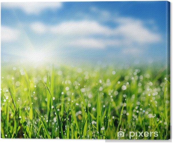 Obraz na płótnie Trawa - Niebo