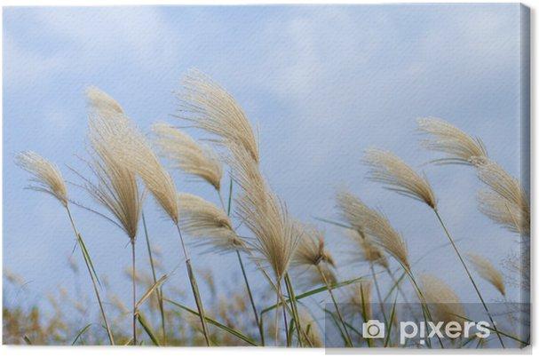 Obraz na płótnie Trawy kołyszące się na wietrze - Rośliny