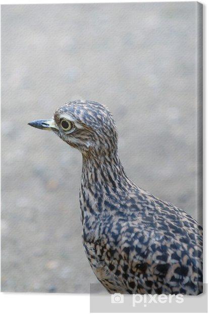 Obraz na płótnie Triel, kwartalne, ptak - Ptaki
