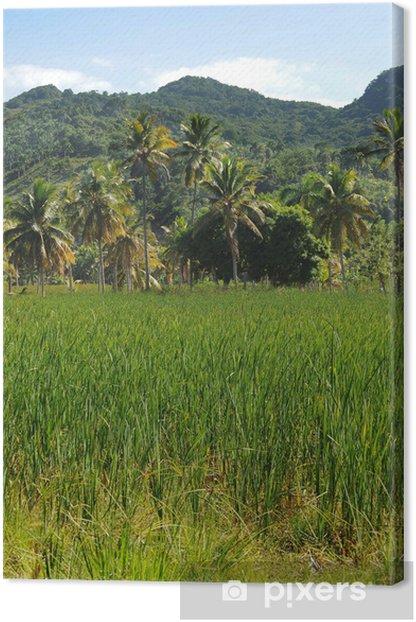 Obraz na płótnie Tropikalna krajobraz z Dominikany - Krajobraz wiejski