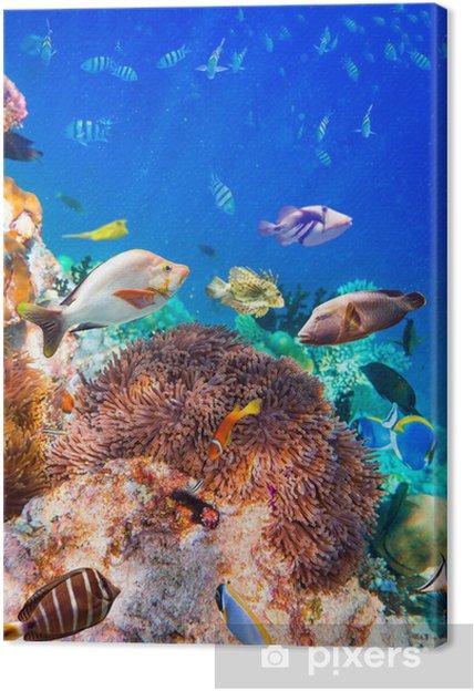 Obraz na płótnie Tropikalna rafa koralowa. - Rafa koralowa