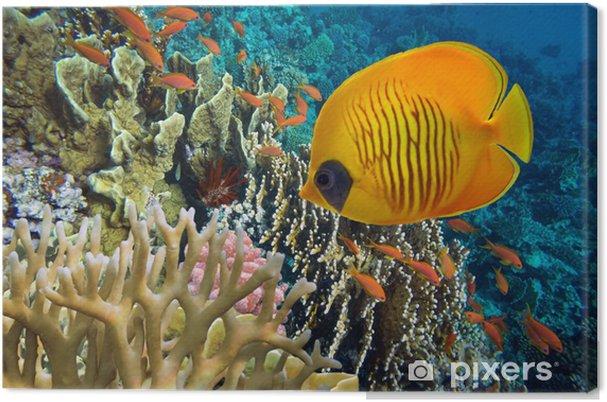 Obraz na płótnie Tropikalna ryba i twarde korale w Morzu Czerwonym, Egipt - Zwierzęta żyjące pod wodą