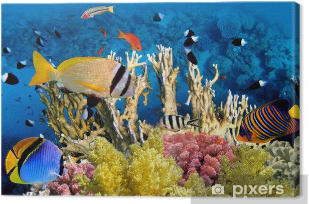 Obraz na płótnie Tropikalne ryby i rafa koralowa - Rafa koralowa