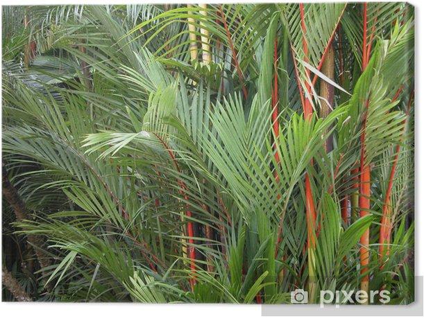 Obraz na płótnie Tropikalnych tle - Rośliny