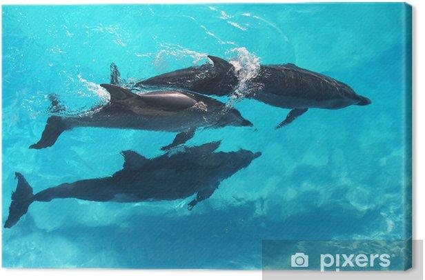Obraz na płótnie Trzy delfiny wysoki kąt widzenia turkusowa woda - Tematy