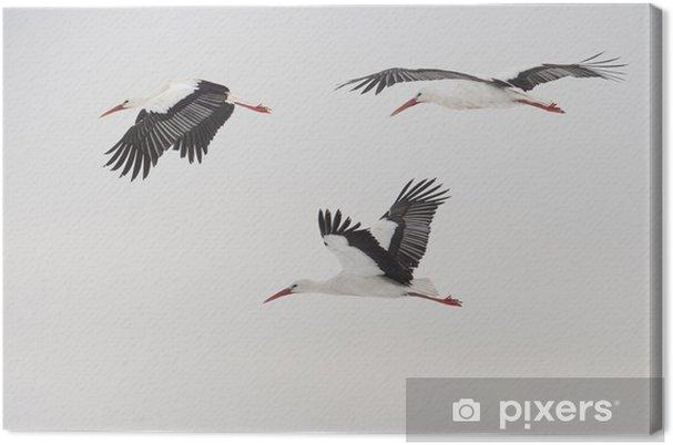 Obraz na płótnie Trzy latające bociany białe - Ptaki