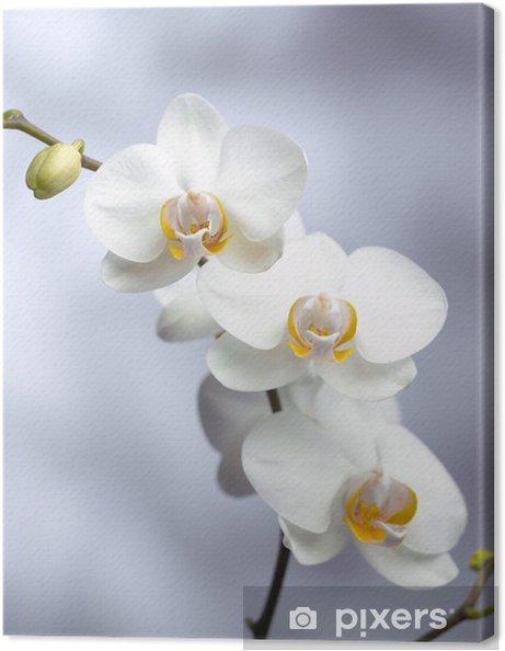 Obraz na płótnie Trzy orchidea - Warzywa