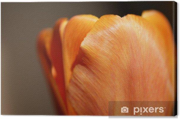 Obraz na płótnie Tulipan płatków - Kwiaty