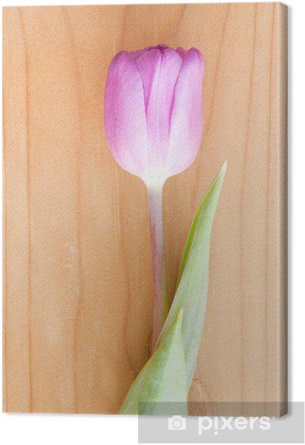 Obraz na płótnie Tulipan - Kwiaty