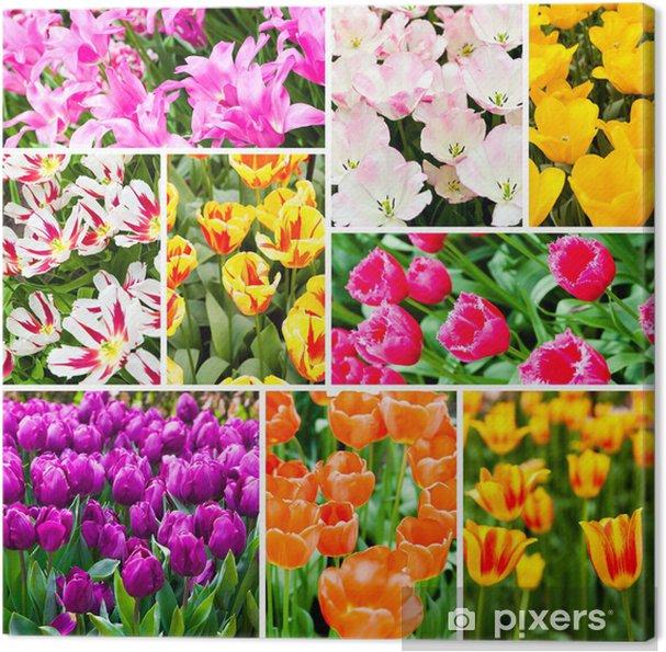 Obraz na płótnie Tulipany kolażu. Wiosenne kwiaty - Kwiaty