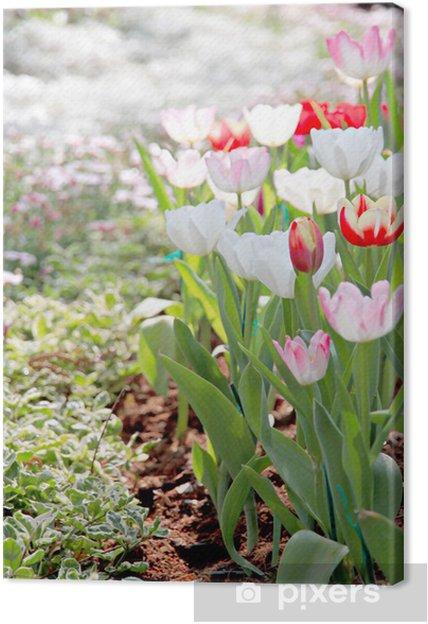 Obraz na płótnie Tulipany w ogrodzie - Kwiaty