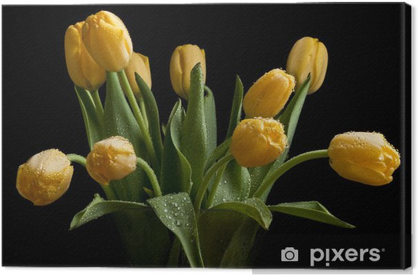 Obraz na płótnie Tulipany w szklanym wazonie na czarnym tle z kroplami - Tematy