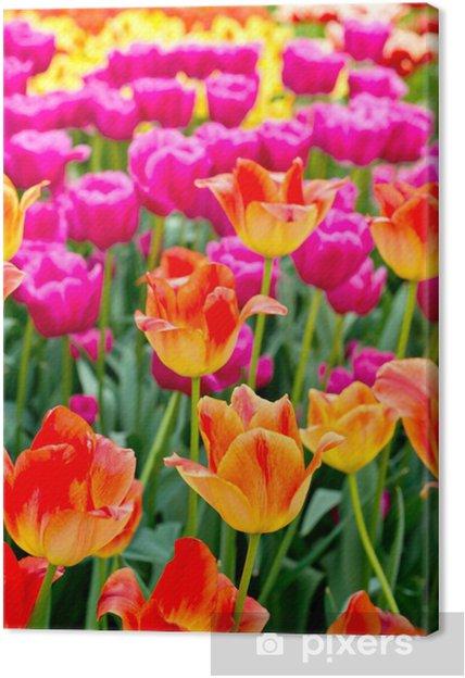 Obraz na płótnie Tulipany w tle - Tematy