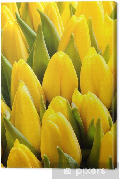 Obraz na płótnie Tulipany - Tła