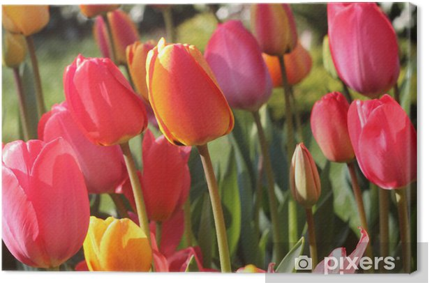 Obraz na płótnie Tulipany - Tematy