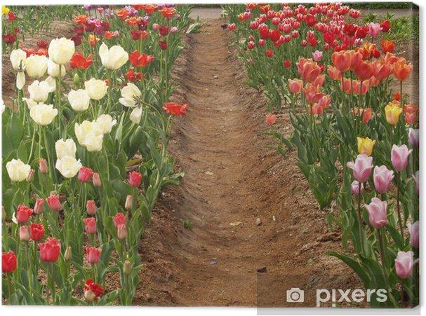 Obraz na płótnie Tulipany - Pory roku