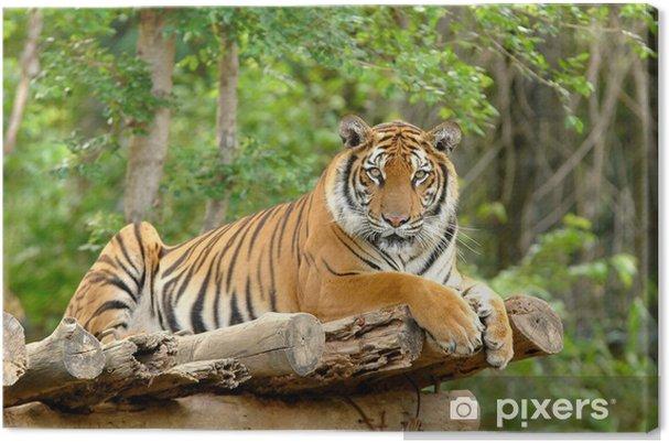 Obraz na płótnie Tygrys bengalski - Tematy